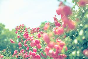 """コンセプトは『百花繚乱』。多数の花を人に見立て、優秀で独創的な人が一堂に会することを表現した、日本限定の美ボトルスパークリングワイン、""""CHANDON(シャンドン)ロゼ"""